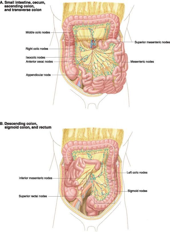 The 1366 best anatomy images on Pinterest   Anatomy, Human body and ...