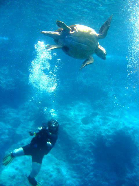 Nautilus Diving from Kas-Antalya-Turkey