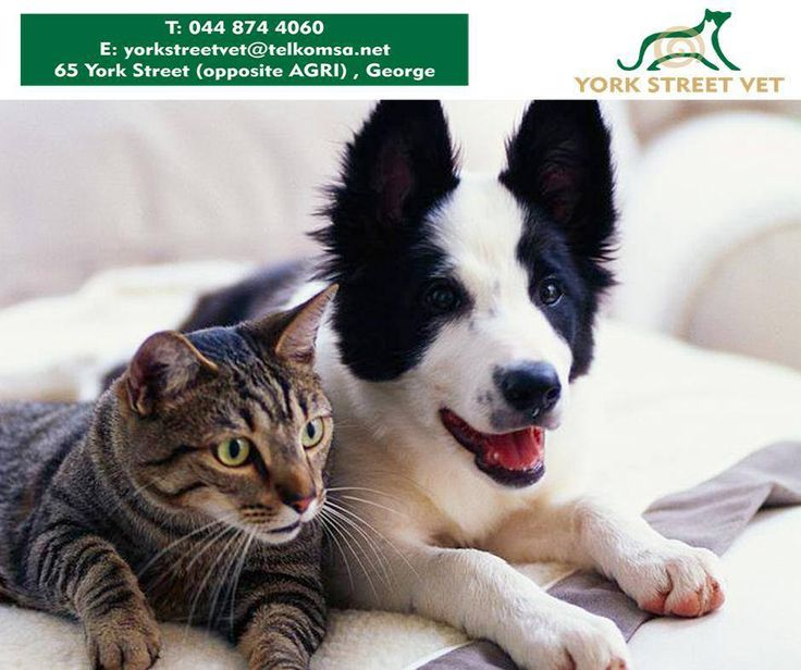 Sterilizing your #dog or cat can decrease the risk of hormone-driven diseases such as mammary cancer, as well as undesired hormone-driven behaviours. For more information, call #YorkStreetVet on 044 874 4060 or visit us in store. #ilovemypets https://www.facebook.com/Yorkstreetvetshop/photos/pb.646016452164207.-2207520000.1439134251./800916563340861/?type=3