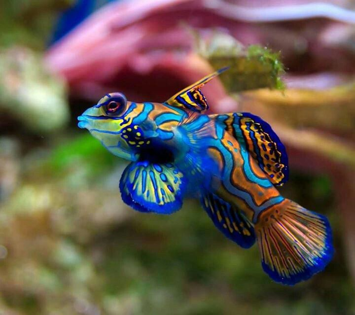 My hubby would love this one. He's obsessed with aquariums and fish.