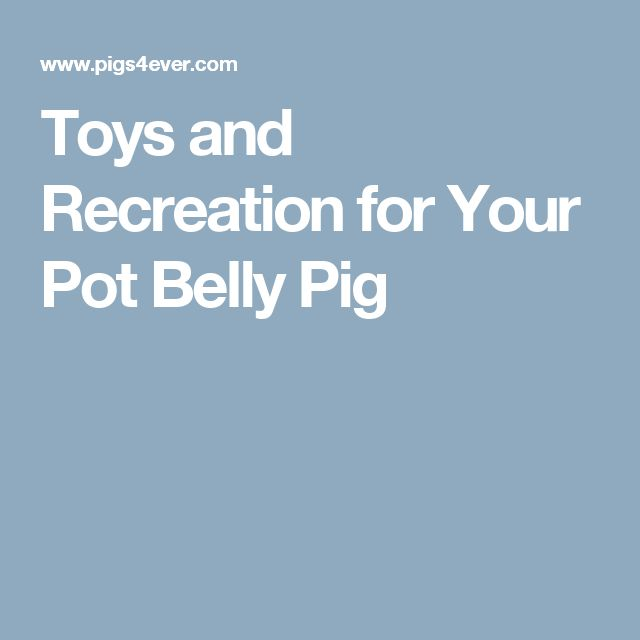 Toys and Recreation for Your Pot Belly Pig