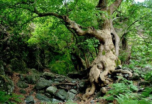 samothraki forest by Christos Kyriazidis, via Flickr