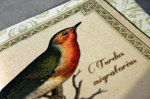 American robin journal songbird vintage style by GuBoArtBook,