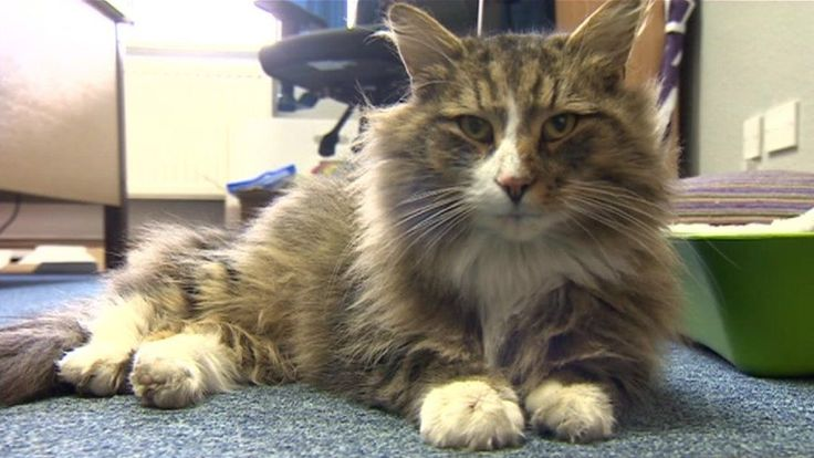 """A cat missing for more than a year is reunited with his owner after he was found """"feasting"""" in a pet food warehouse."""