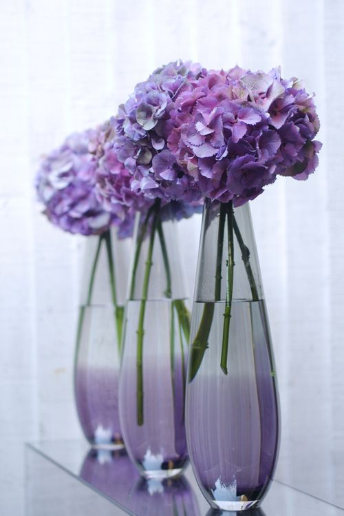 Purple blue hydrangea. Rows and line-ups of matching flowers always look classy