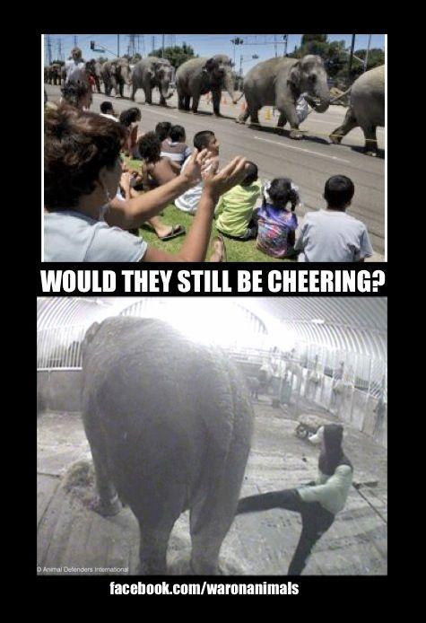 Boycott all circuses!