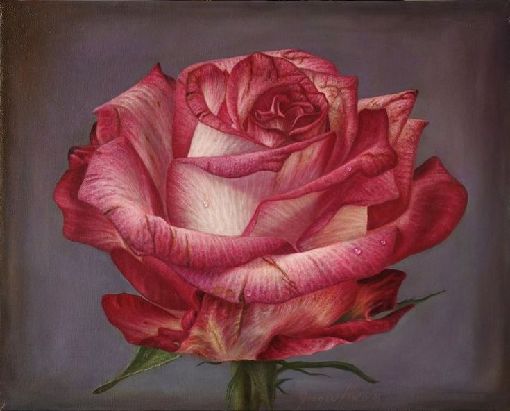 Delicate-hyper-realistic-paintings-of-roses-by-Gioacchino-Passini-10.jpg (740×596)