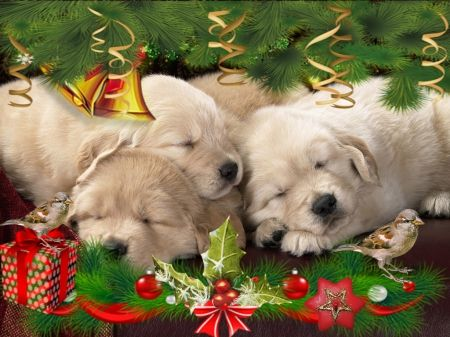 Xmas Puppies - dogs, christmas, pupies, holiday, animals