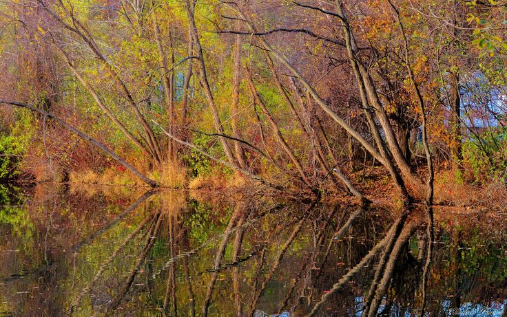 """AccuFan #Weather Photo of Day: Reflections in NJ by """"elizabethbran"""" on 11/7  #photooftheday"""