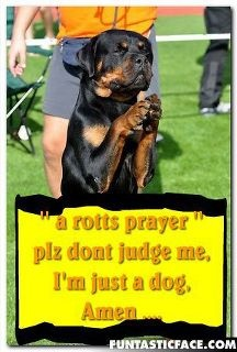 Remember this!: Rotti Prayer, Boxers Rottweilers, Fantastic Rottweilers, Rotti Rules, Furbabi, Rotten Rottweilers, Rotten Rotti, Rottweilers Lovers, Rottweilers Dogs