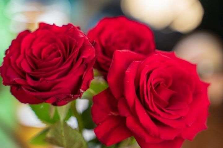 Fantastis 24 Gambar Bunga Kartun Mawar Mawar Kerap Menjadi Simbol Romansa Dan Cinta Mawar Bunga Mekar Merah Mawar Wallpaper 9111 Gambar G Di 2020 Mawar Gambar Bunga