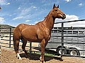 Barrel Racing at Barrel Horse World, Barrel Horses for Sale, Barrel Racing Forums, Equine Health Articles, Western Tack, and more he's 12 and still going