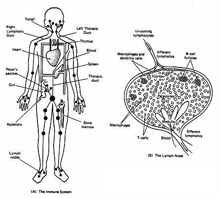 Lymph System Detox Bath How To Detox With A Clay Bath