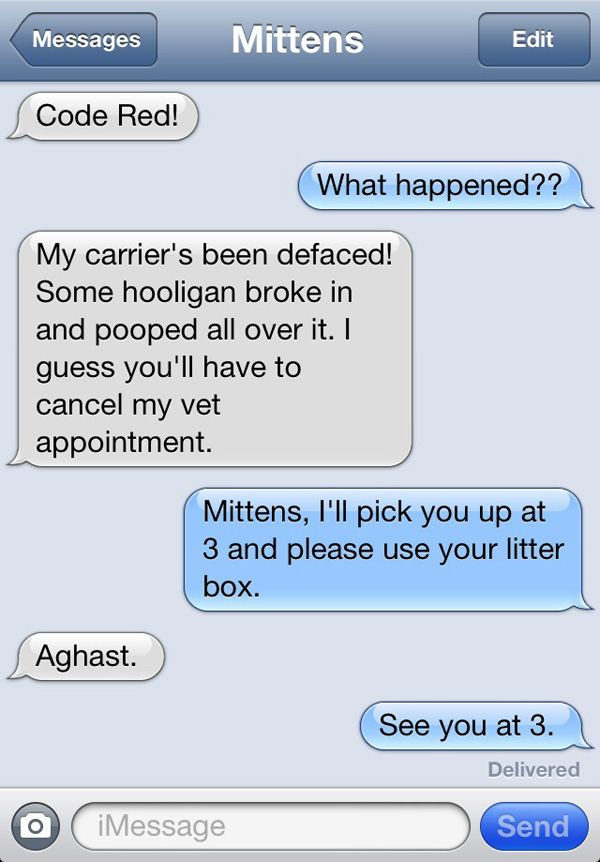 Mittens the text messaging cat
