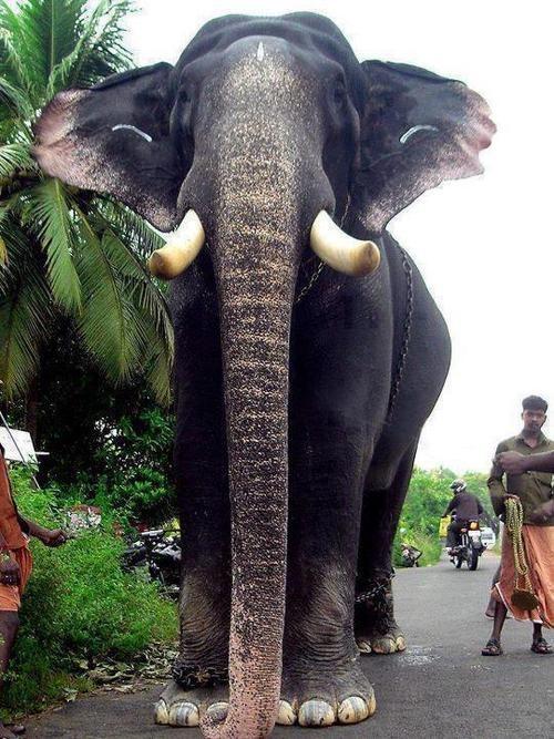 Kerala Elephant Wallpaper Hd
