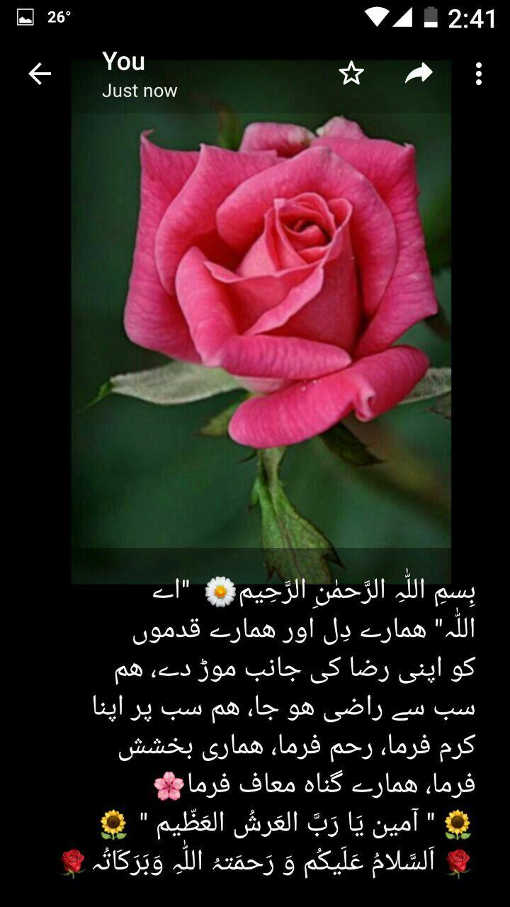 Pin By Mian Zubair Zia On سلام و دعا Greetings Rose Flowers