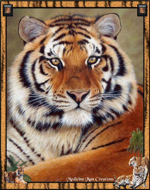 Tiger Blinking-