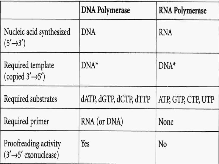 DNA polymerase: has proofreading activity and requires a primer. RNA polymerase: no proofreading activity and does not require a primer.