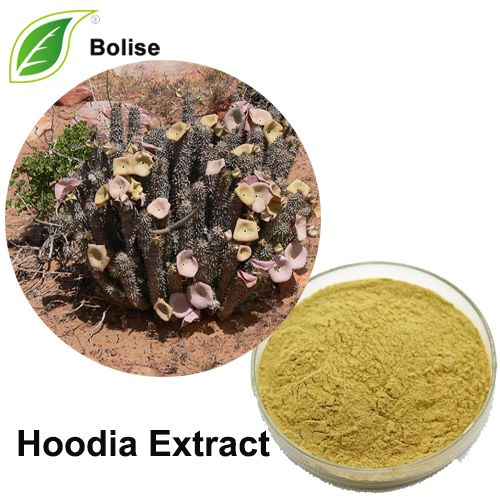 Hoodia Gordonii Is Sold In Capsule Powder Liquid Or Tea Form In