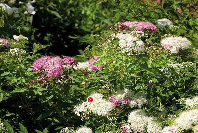 Avalanche de fleurs | Les idées de ma maison  © Photos: François Laliberté #deco #exterieur #fleurs #rocaille #lacbeauport #ammenagement #floraison #cascade #jardin #spiree #japon