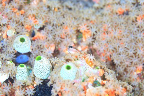 可愛い魚たちに胸キュン!ある「日本人水中カメラマン」の写真が素敵すぎる | RETRIP