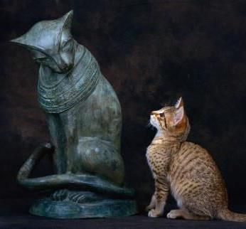 missexlibris: Bastet the protectress of women, children, and domestic cats. She is the goddess of sunrise, music, dance, and pleasure as well as family, fertility, and birth.