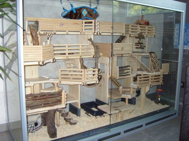 die besten 25 hamsterk fig holz ideen auf pinterest gerbil w stenrennmaus k fig und hamster. Black Bedroom Furniture Sets. Home Design Ideas