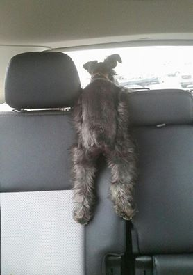 this I recognize - my little Dixie always wants to be in the front seat between us