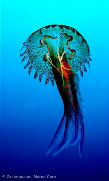 jellyfish in the mediterranean   ;)