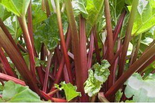 How to Plant Rhubarb in Containers (9 Steps) | eHow