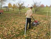 Don't Rake those Leaves. Mulch them into Your Lawn