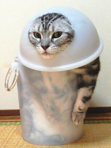 Kitty, how did you get in there? lol