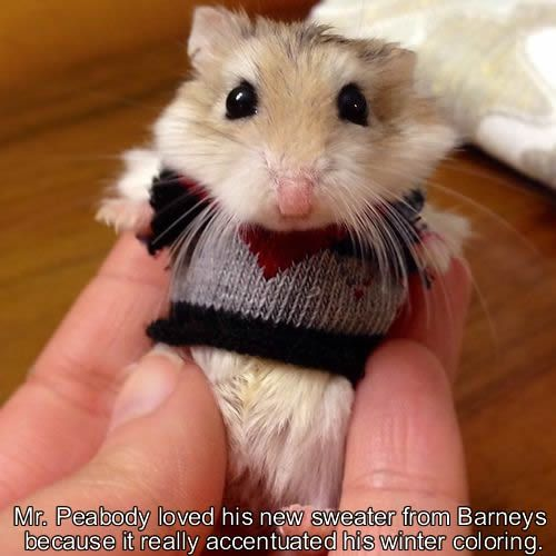 A cute sweater plus a cute hamster.  So much cuteness that You can't even handle.