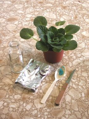 lots of cool and simple plant experiments                                                                                                                                                                                 More