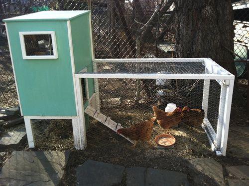 Brooklyn is Chicken Crazed, Chicken Company Reports