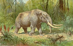 "10 facts about... Mastodons. And a list of other animals with slideshows of ""10 facts about..."" Great resource for generating ideas! I love extinct animals..."