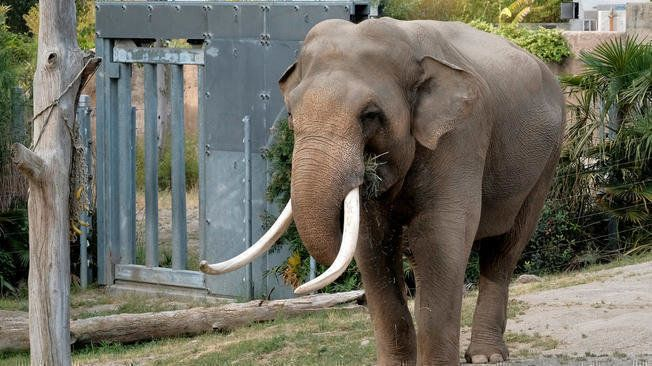 Petition Let Billy The Elephant Stay At The La Zoo Change Org Elephant Los Angeles Zoo Zoo