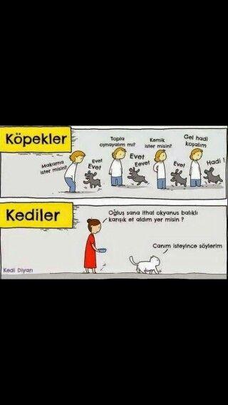 Kediler ve Köpekler. ...
