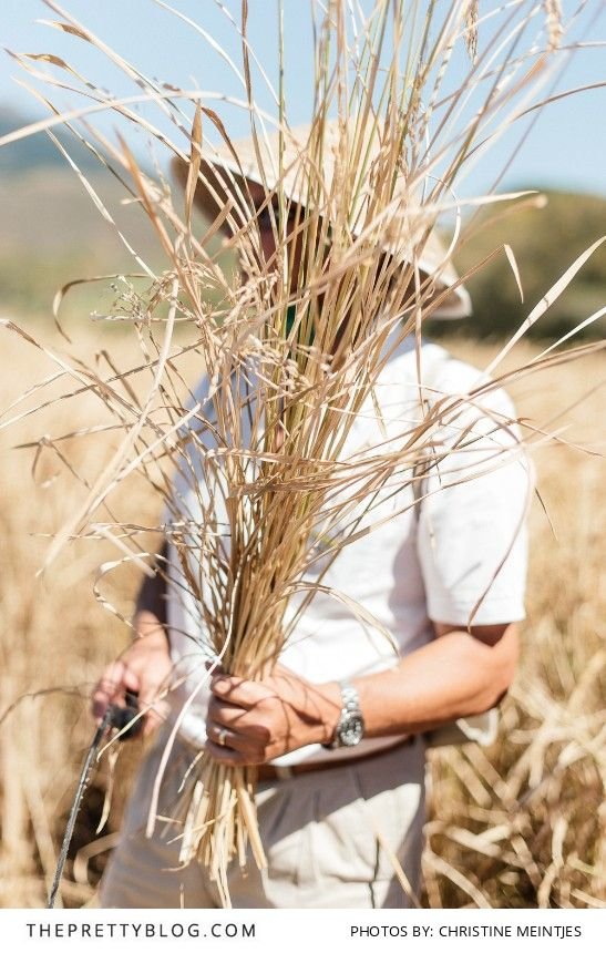 Risotto Harvest at Babylonstoren   Country, We love   Photography by Christine Meintjes