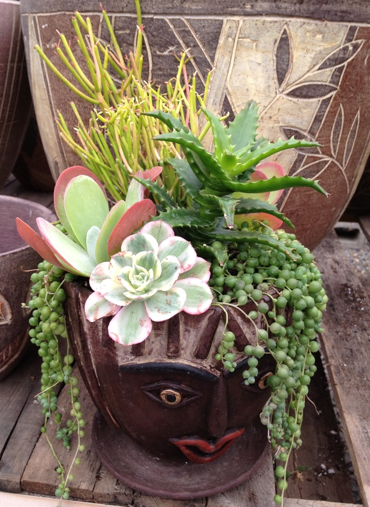 Succulent pot with Euphorbia Aloe Kalanchoe Flap Jack