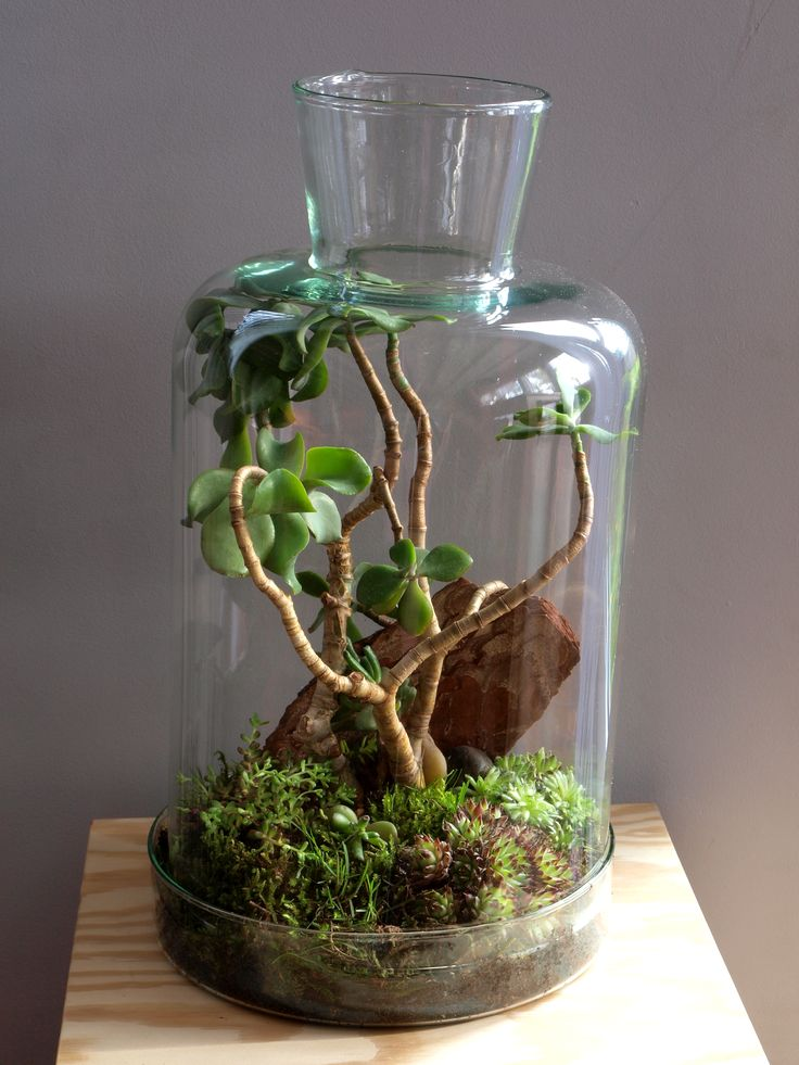 Sukulenty w terrarium.
