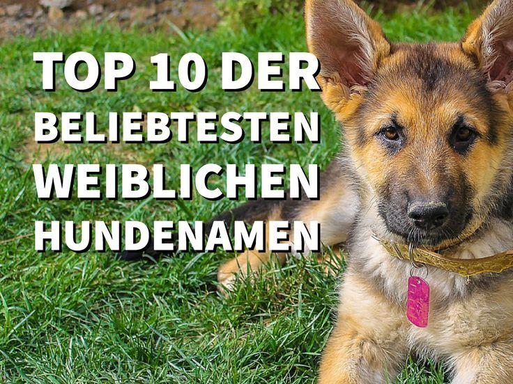 Berühmte Hundenamen