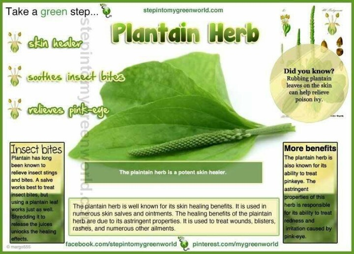 herbs and their uses pdf