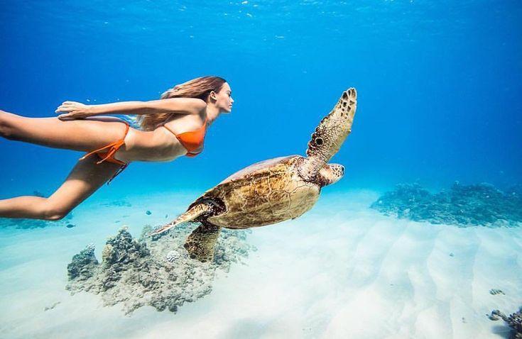 Foto: Nadando con una tortuga marina en aguas de la isla hawaiana de Oahu, por France Duque y Jesse Rambis
