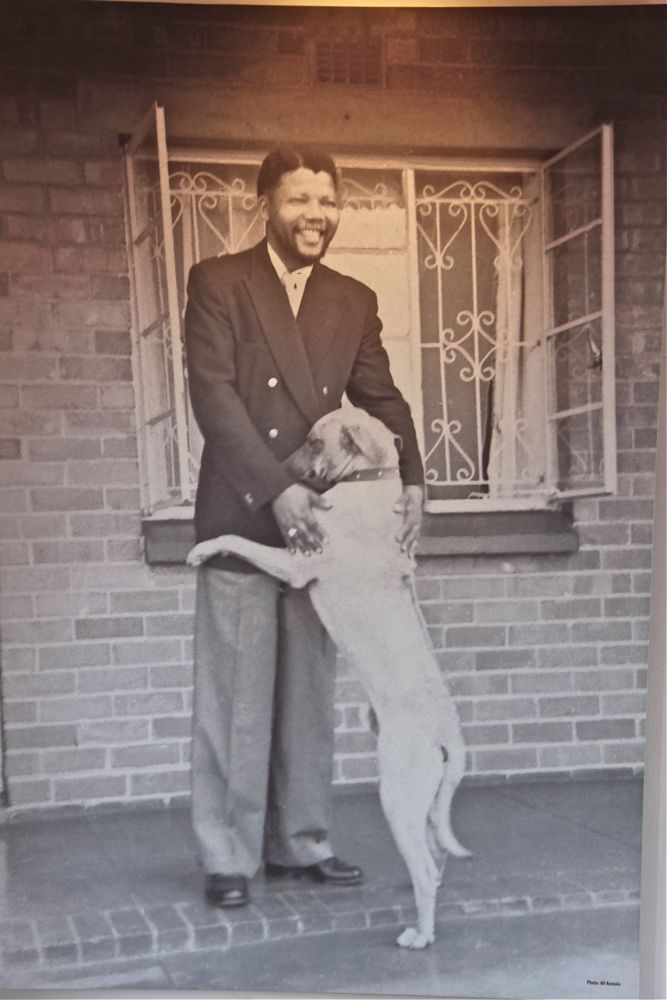Home at last. Madiba welcomed by his Rhodesian ridgeback. Photo print on the wall  in Mandela House, Soweto, Johannesburg, South Africa.