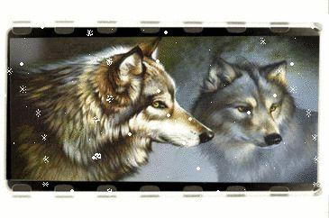 Glitter Gif Picgifs wolves 425424