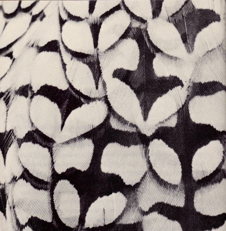 Amazing feather pattern