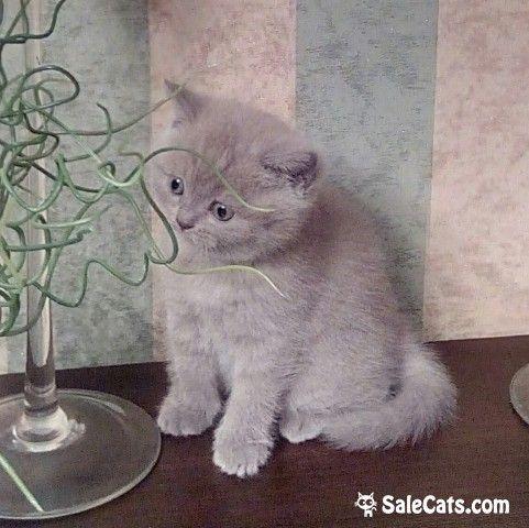 Здесь можно выбрать себе котёночка на СЧАСТЬЕ,  http://salecats.com/albums/59-kotjata-ischut-dom.html