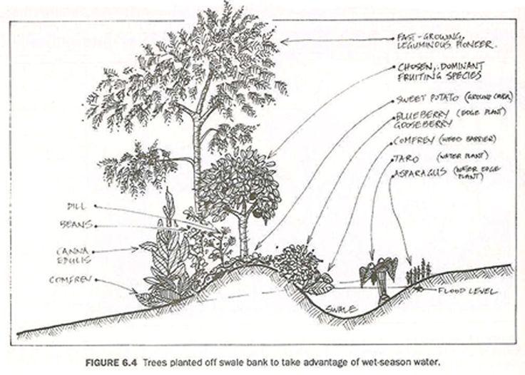 1000 images about hugelkultur on pinterest gardens for Terrace farming diagram