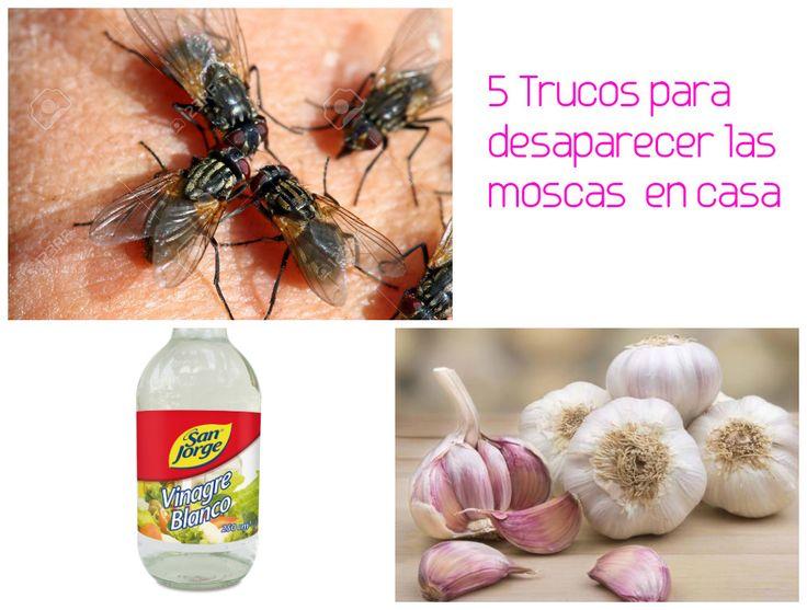 5 trucos para eliminar o espantar las moscas en casa - Como sacar las moscas de la casa ...